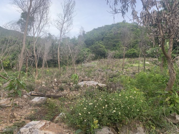 Bán đất làm vườn thôn An Ninh Diên An DT 3014m2, giá 1 tỷ 3