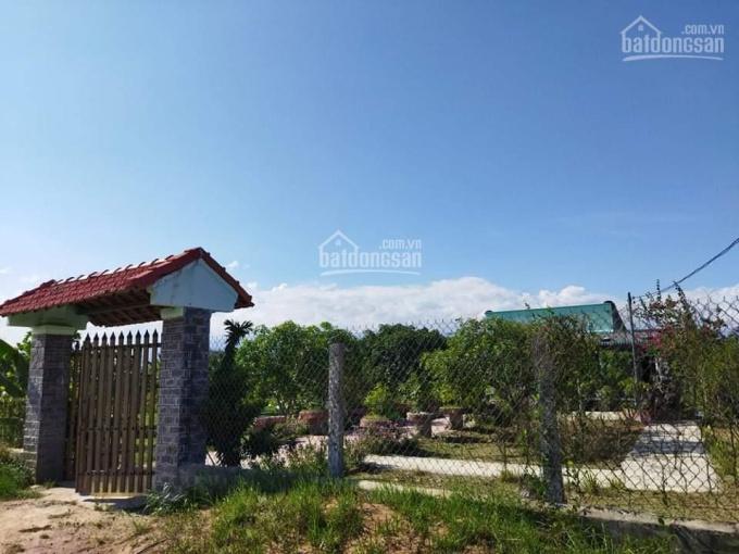 Chủ tuổi già cần bán nhà vườn đang thu hoạch Ninh Xuân, TX Ninh Hòa, điện nước đầy đủ, ôtô tận nơi