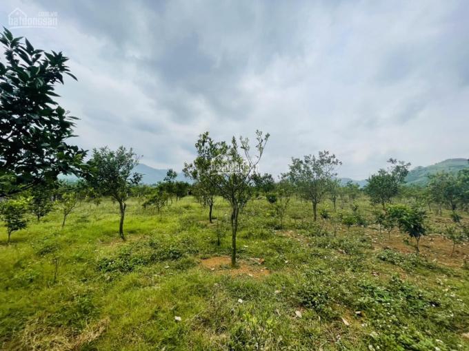 Cần bán gấp lô đất 4343m2 tại Cao Phong Hòa Bình ảnh 0