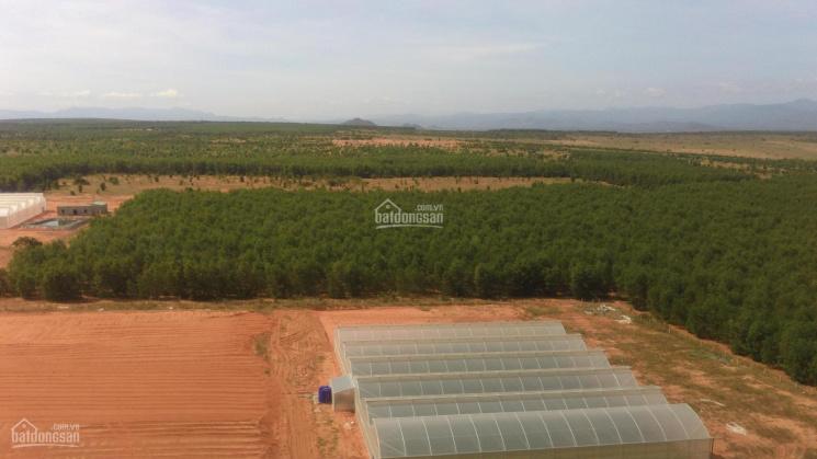 Chọn lọc danh sách hơn 20 lô đất tiềm năng đầu tư Bình Thuận ảnh 0