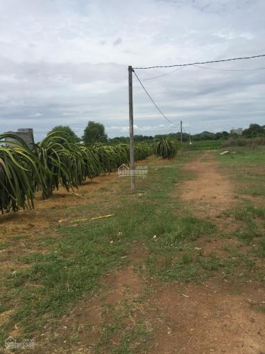 Chính chủ cần bán 12ha đất đang trồng thanh long tại xã Bình An, huyện Bắc Bình, tỉnh Bình Thuận ảnh 0
