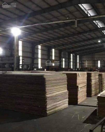 Bán gấp 11000m2 nhà máy gỗ Nam Định ảnh 0