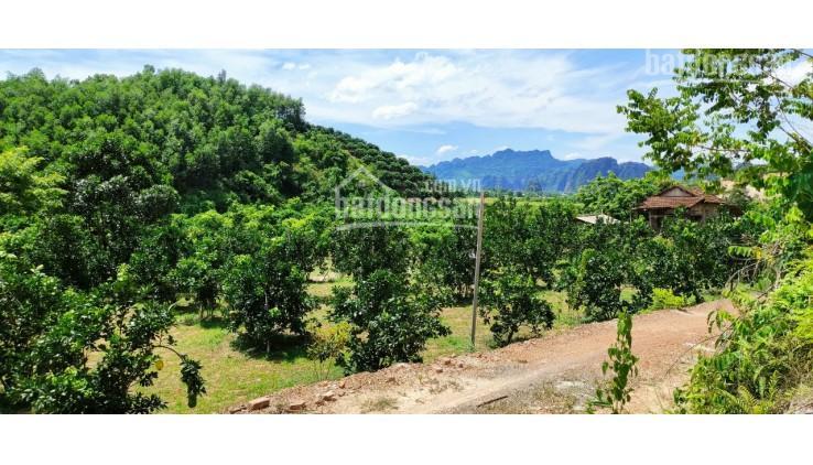 Chính chủ cần bán gấp mảnh đất thuộc Tân Lạc 16000m2 400 thổ cư còn lại đất vườn lâu năm ảnh 0