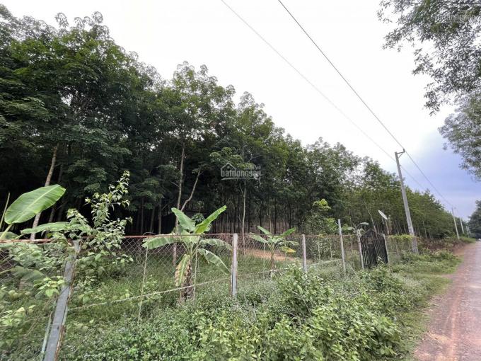 Bán đất lô cao su cạo 5 năm 2.7ha, 90m mặt tiền nhựa Thuận Lợi Đồng Phú giá 10 tỷ ảnh 0