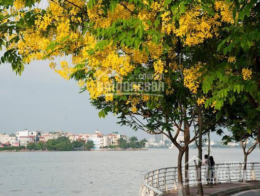 Nhà đẹp Trích Sài, Tây Hồ - 3 ô tô tránh - Ở vip - Kinh doanh đỉnh - 85m2x4T, MT 6.5m - Giá 13,9 tỷ ảnh 0