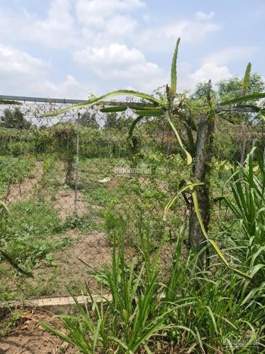 Bán đất trồng cây lâu năm giá rẻ đường T6 nối dài, xã Hưng Long, Bình Chánh ảnh 0