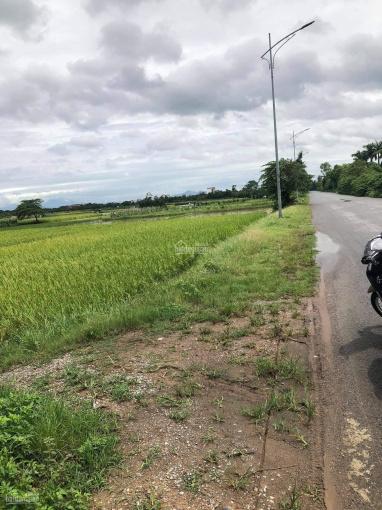 Bán đất ruộng 50 năm tại Nam Hồng ảnh 0