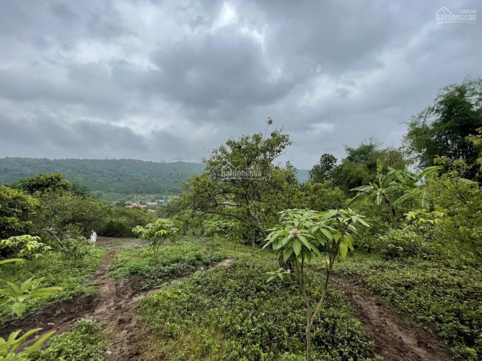 Bán mảnh đất rất đẹp thuộc Bản Vặt - Xã Mường Sang - TT Mộc Châu - Sơn La ảnh 0
