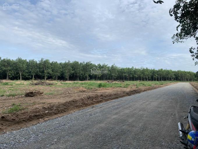 Bán đất ngay mặt tiền Mỹ Phước Tân Vạn 800tr/350m2 ảnh 0
