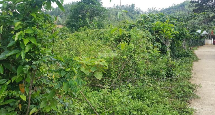 Bán đất 5000m2 có 400m2 đất ở Hòa Ninh, Hòa Vang, gần Bà Nà Đà Nẵng ảnh 0