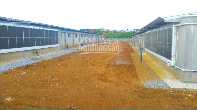 100ha trang trại tại Đắk Lắk đầy đủ giấy tờ ảnh 0