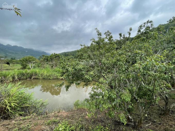 Bán mảnh đất Mộc Châu 6200m2 đất thoải đẹp suối chảy quanh, ngay gần thác Dải Yếm, 0822356688 ảnh 0