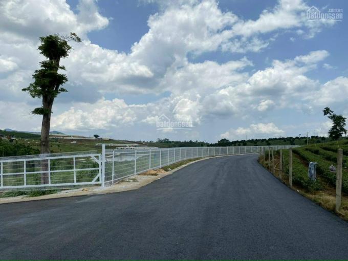 Đất phía Nam Đà Lạt nhà đổ nợ bán gấp hai lô đất 500m2 3.5 tr/m2 đã có sổ, thổ cư full 250m2 % ảnh 0