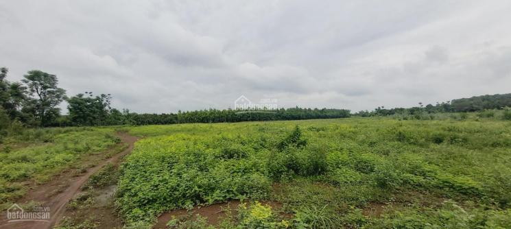 Bán 2,1 mẫu đất (20900m2), liền kề KCN Suối Nho ảnh 0