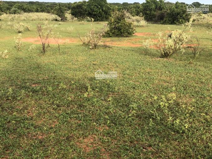 Chính chủ bán lô đất 6396m2 giá bán 669 triệu, mặt tiền đường 67m, gần KDC, sổ đỏ công chứng ngay ảnh 0