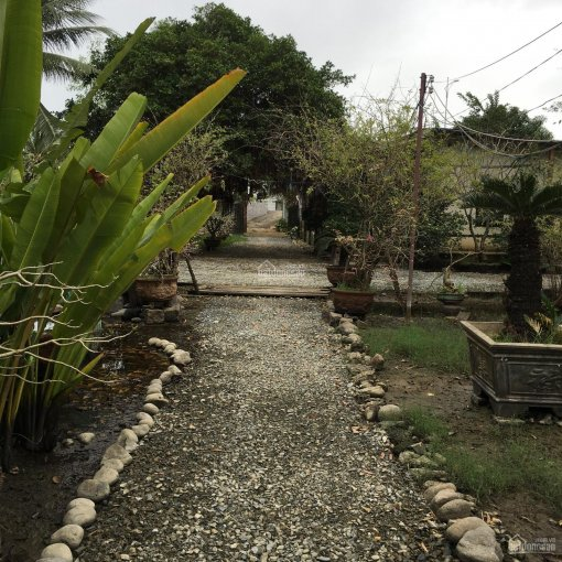 Tôi chính chủ cho thuê đất vườn ngay trung tâm thành phố Nha Trang phù hợp mọi ngành nghề ảnh 0