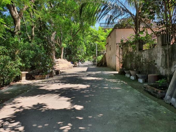 Bán đất thôn Lương Quy - xã Xuân Nộn - Đông Anh (121m2) ảnh 0