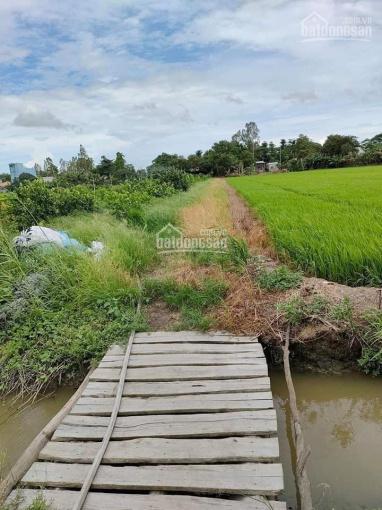 Chính chủ cần bán 65 công đất ruộng khu vực An Giang ảnh 0
