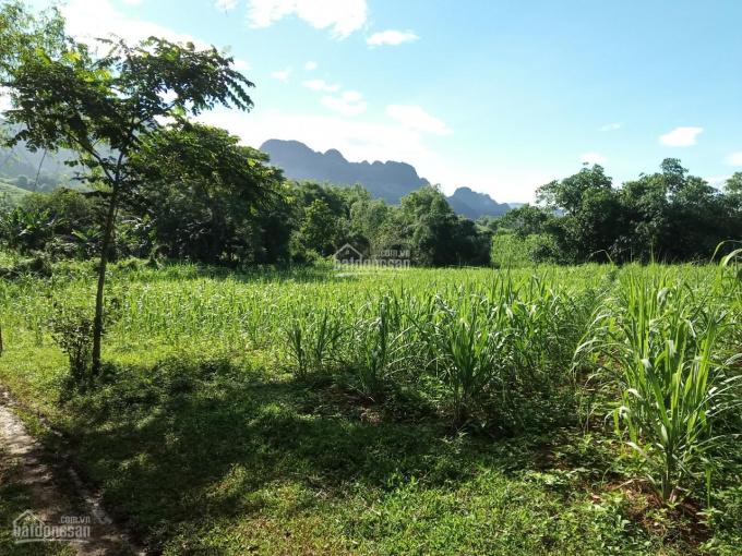 Bán đất Tân Lạc chỉ 275nghìn/m2 sở hữu ngay mảnh 3000m2 có 200m2 thổ cư ảnh 0