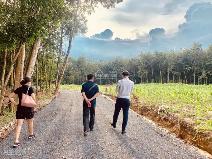 Đất sào xã Phước Bình, huyện Long Thành, giá F0 đầu tư đón đầu thị trường, chỉ còn 2 lô từ 1000m2 ảnh 0
