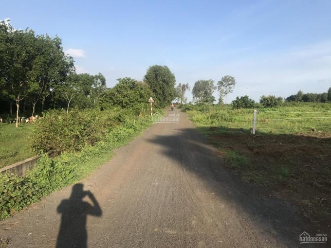 Bán đất sào gần 2 khu công nghiệp lớn tại xã Long Tân, Đất Đỏ, BR - VT ảnh 0