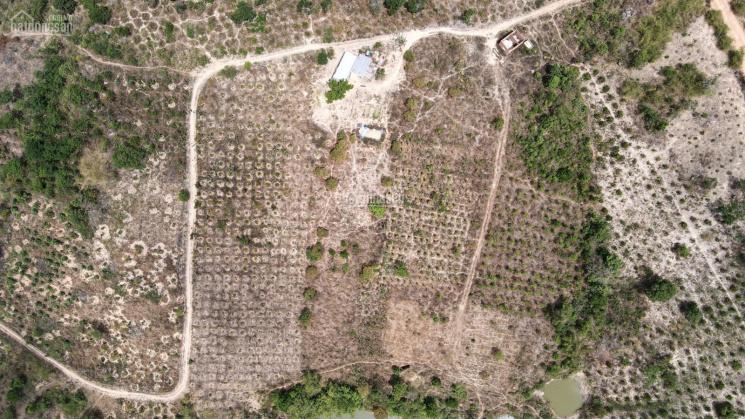Thanh lý thửa đất tại thôn 9A, xã Ea Hiao, H. Ea H'Leo, Đắk Lắk - DT 14181.1m2 (1hec4) - 525 triệu ảnh 0