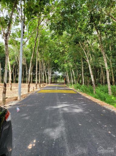 Chính chủ cần bán thửa đất xã Phú An, Bến Cát, DT 2.700m2, sổ sẵn như hình ảnh 0