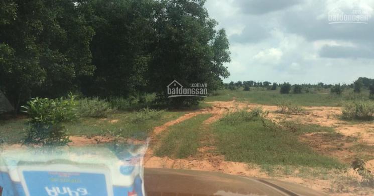 Bán lô đất 6396m2 xã Phan Thanh giá bán 669 triệu, sổ hồng bao công chứng ngay, LH 0937251240 ảnh 0