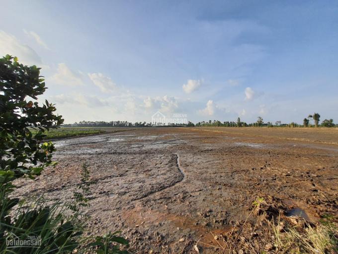 Bán 18.000m2 (22x700m, nở hậu, đất lúa) đường đá 3m, xã Láng Biển, H. Tháp Mười, Đồng Tháp ảnh 0