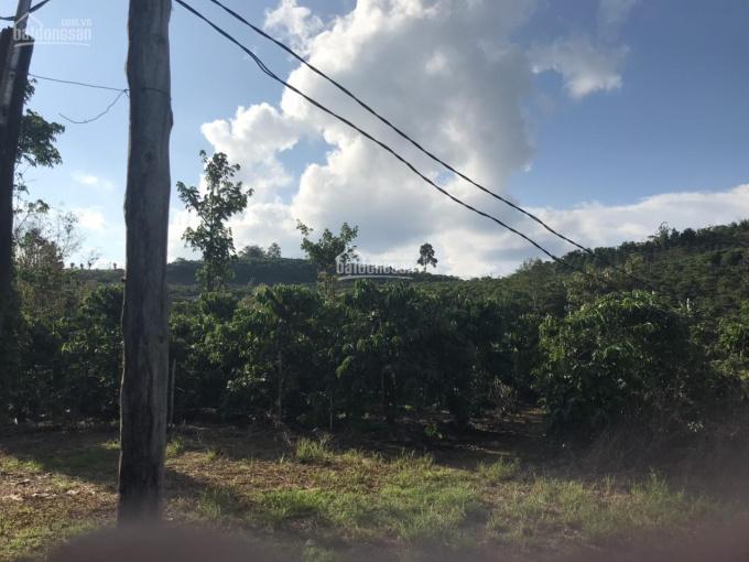 Bán 1,6 ha (16.000m2) đất view đẹp thôn 4 xã Lộc Tân-Sắp quy hoạch xã Dambri, TP Bảo Lộc, Lâm Đồng ảnh 0