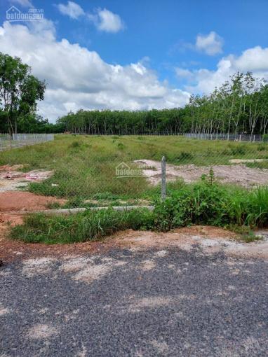 Bán đất xã Hưng Thuận, Huyện Trảng Bàng, Tỉnh Tây Ninh, diện tích 11000m2 ảnh 0