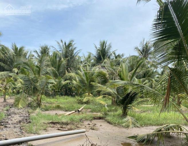 312m đất vườn đang trồng dừa, huyện Tân Phú Đông, Tiền Giang ảnh 0
