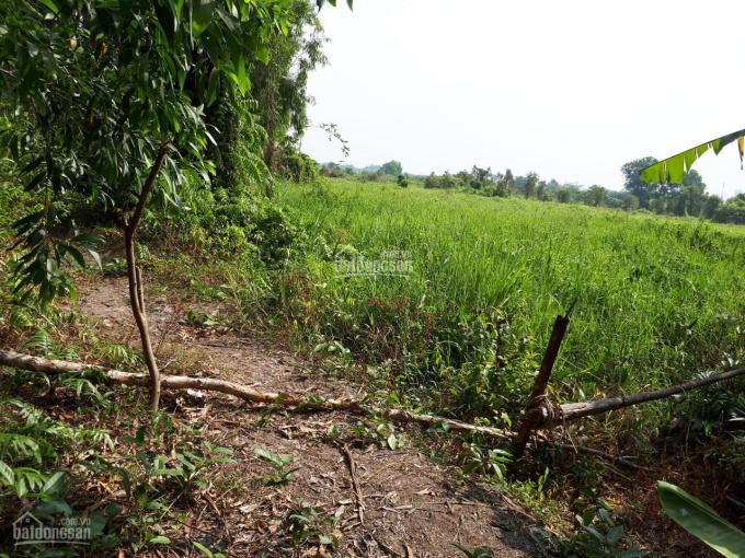 Bán lô đất 2 mặt tiền Rạch lớn, gần sông Sài Gòn, DT 2553.1m2, thổ 300m2, chỉ 2.1 tr/m2 ảnh 0