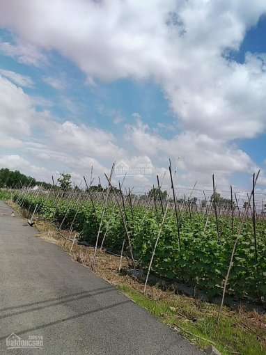 Đất nền rẻ Xuân Thọ, cách Long Khánh 5p xe máy ảnh 0