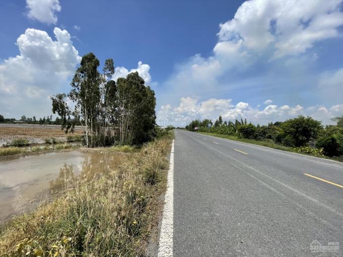 Bán lô đất nông nghiệp 10.000m2 xã Bình Thạnh Trung, Lấp Vò, Đồng Tháp ảnh 0