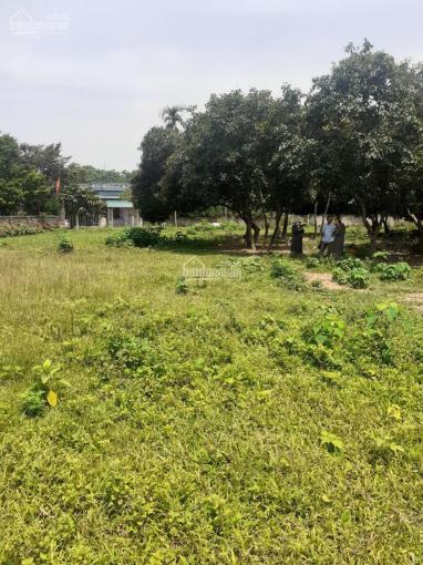 Chính chủ gửi bán 2000m2 đất trang trại nhà vườn giá đầu tư tại Tản Lĩnh, Ba Vì, Hà Nội ảnh 0