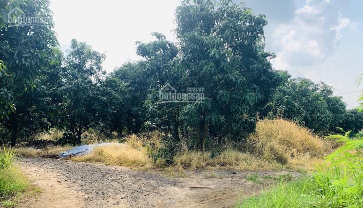 Đất giá tốt để đầu tư hơn 1 sào vị trí ngay mặt tiền đường Nagoa gần cầu La Ngà Đồng Nai ảnh 0