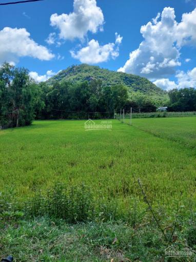 Chính chủ cần bán 2 công đất ruộng khu vực vành đai Núi Óc Eo, Thoại Sơn, An Giang ảnh 0