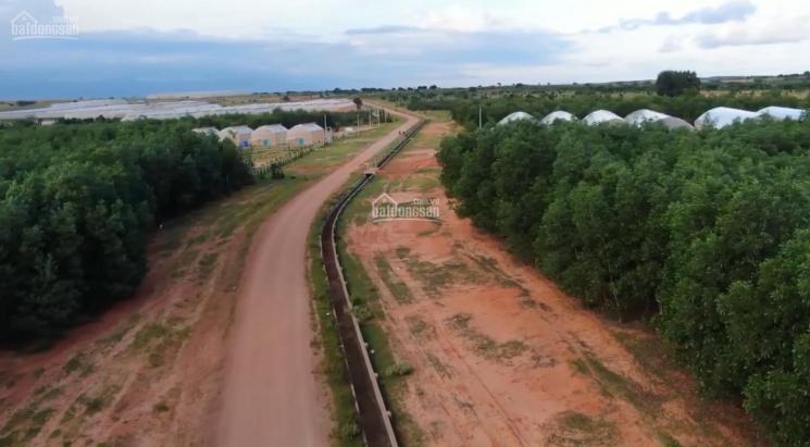 Em còn 1 mảnh 2hecta ở Phan Thanh Bắc Bình Bình Thuận giá 85 triệu/1000m2 sđt 0888 775 070 ảnh 0