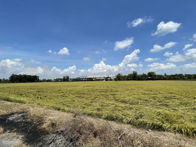 Bán 9.000m2 đất chính chủ có sổ hồng mặt tiền 65m Tỉnh Lộ 852B - Giá rẻ nhất khu vực, chỉ 7,5 tr/m2 ảnh 0