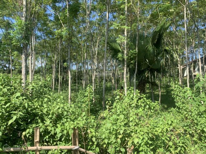 Bán đất Kim Bôi, Hòa Bình diện tích rộng 4490 m2, full thổ cư ảnh 0