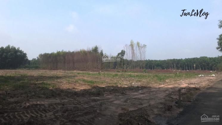 Sang nhượng mảnh đất 5956m2 (50m mặt tiền) - SHR - Đất ở - 2.6tr/m2 ảnh 0