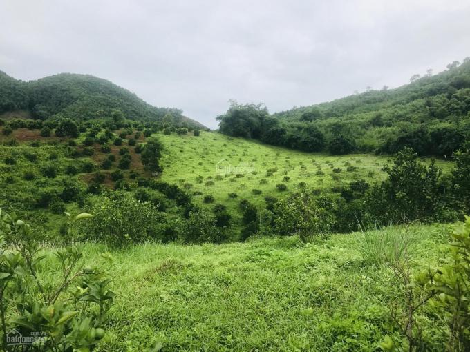 Bán 2,3 ha đất có 800m2 ONT ở Kim Bôi Hoà Bình. Có ao, giá hợp lý, giao thông thuận tiện ảnh 0