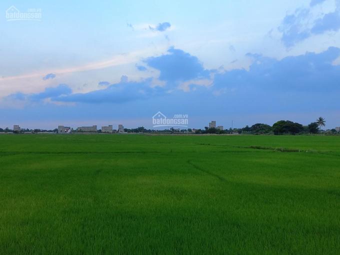 Cần bán đất tại Long Bình, xã An Hải, huyện Ninh Phước, Ninh Thuận. LH 0917960800 ảnh 0
