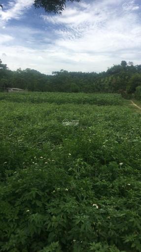 Chủ cần tiền bán nhanh 2385m2 full thổ cư tại Bình Sơn, Kim Bôi, Hòa Bình rẻ đẹp ảnh 0