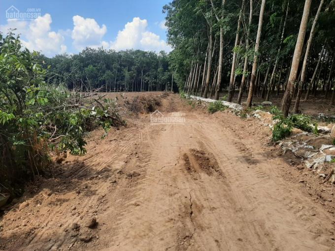 Bán hơn 1,5 ha đất trồng cây cao su đã 12 năm tuổi ảnh 0
