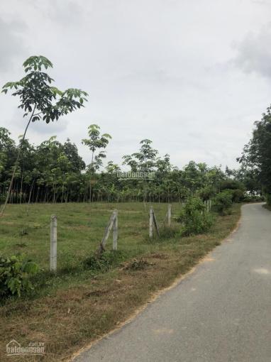 Đất Vườn - Đường Nhựa Rộng 6m, Gần Khu Dân Cư Xin Được Thổ Cư
