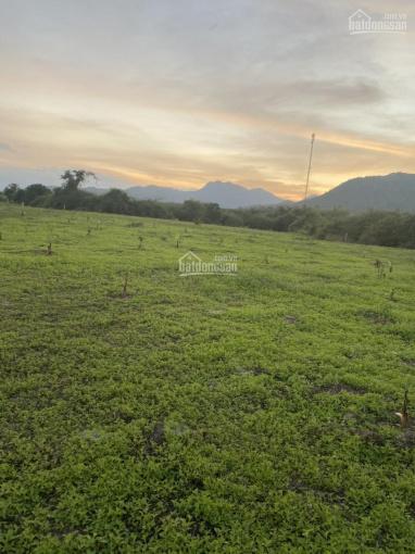 Cần bán 3000m2 đất Ninh Xuân, giá 480tr ảnh 0