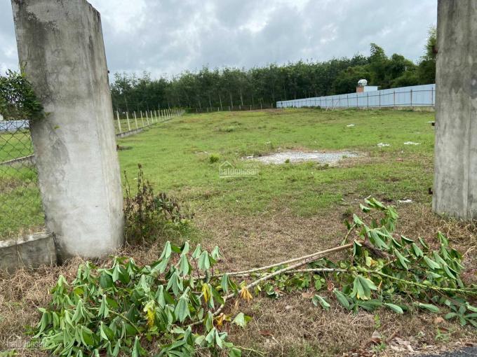 Đất vườn Củ Chi, MT đường Ba Sa, giá rẻ 500m2 1tỷ179 SHR công chứng sang tên ngay ảnh 0