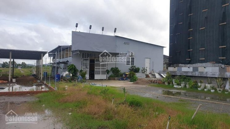 Bán đất chính chủ kèm nhà yến 550m và vườn cây ăn trái, ngay mặt tiền kênh TĐ 4 xã Kiên Bình ảnh 0